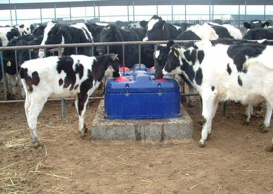 LLDPE Livestock Water Trough